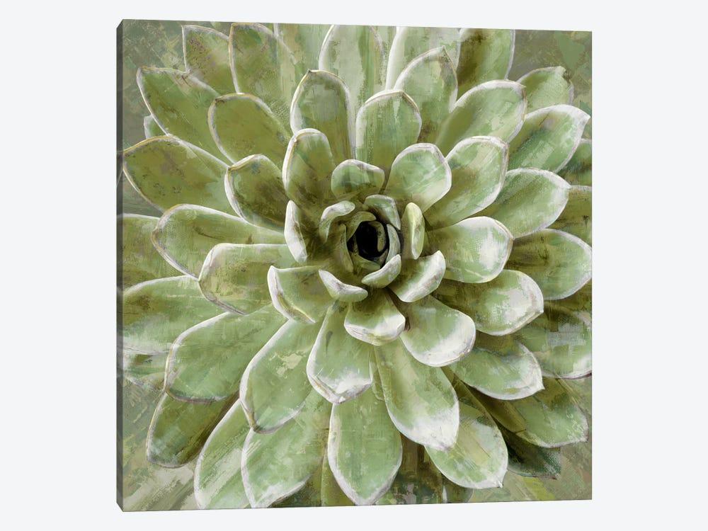 Succulent VI by Lindsay Benson 1-piece Canvas Print