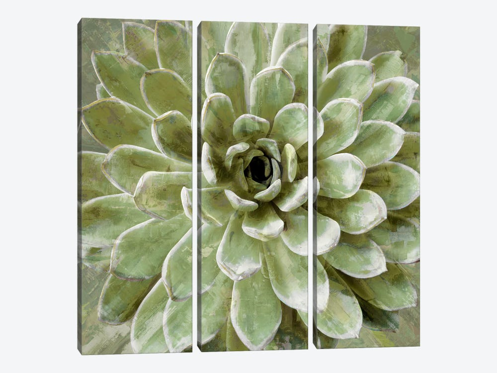 Succulent VI by Lindsay Benson 3-piece Art Print