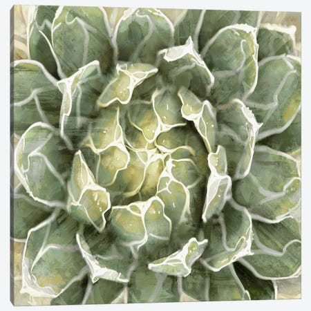 Succulent VII Canvas Print #BNS7} by Lindsay Benson Canvas Print