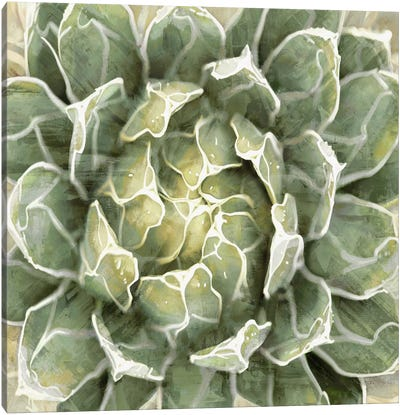 Succulent VII Canvas Art Print