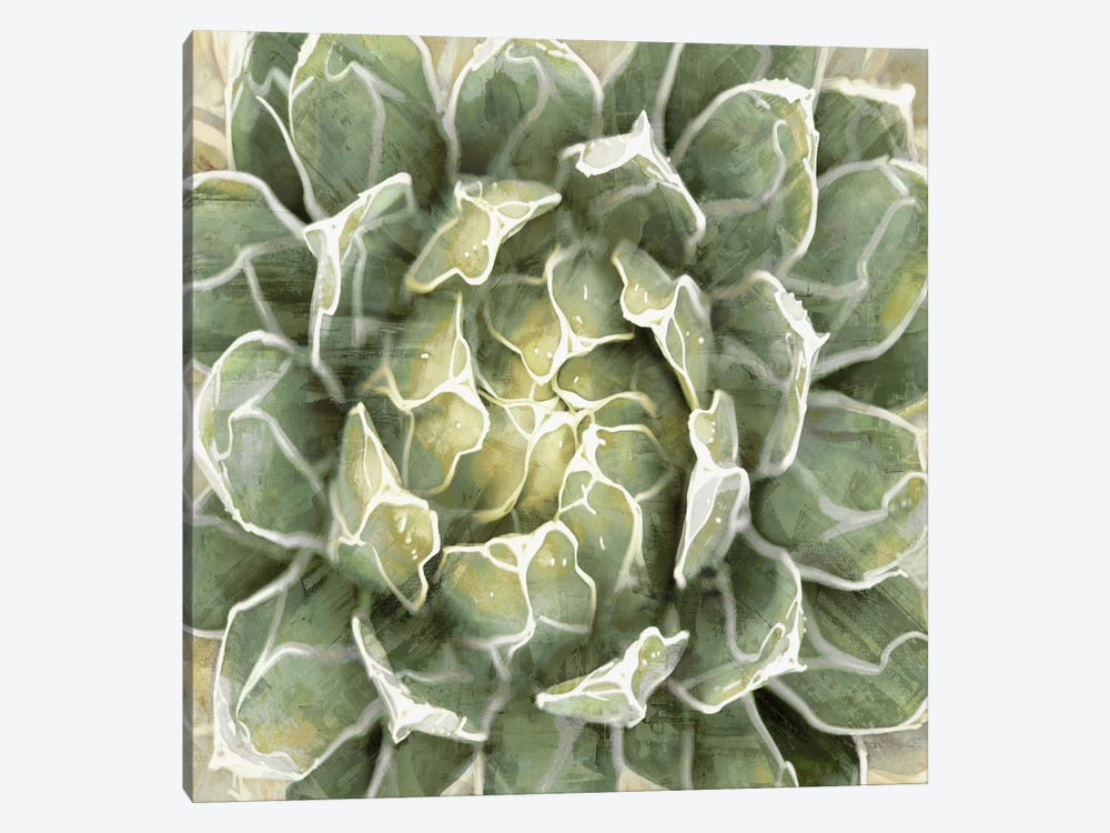 Succulent VII by Lindsay Benson 1-piece Canvas Artwork