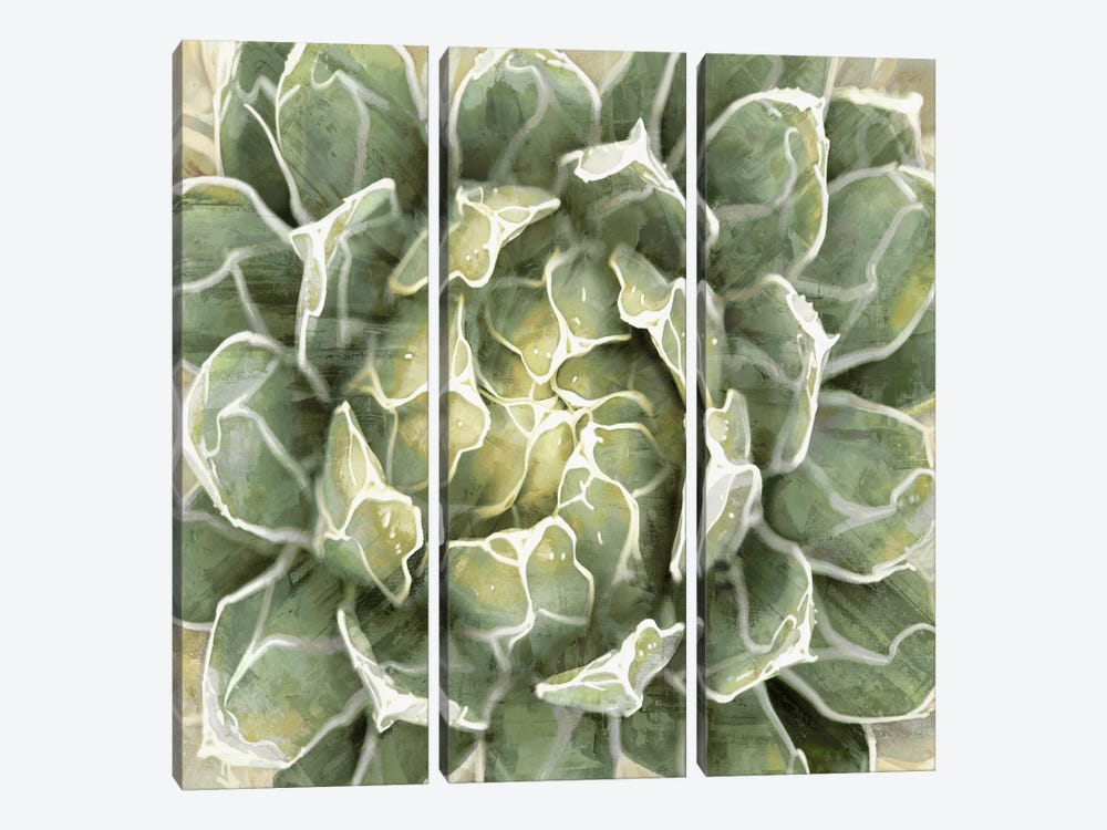 Succulent VII by Lindsay Benson 3-piece Canvas Wall Art
