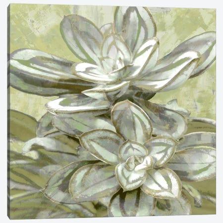 Succulent VIII Canvas Print #BNS8} by Lindsay Benson Canvas Wall Art