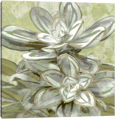 Succulent VIII Canvas Art Print