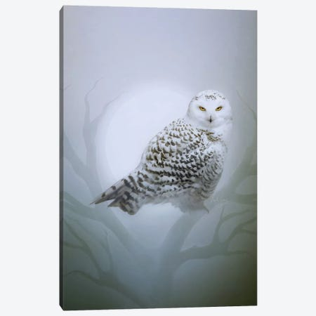 Snow Owl Canvas Print #BNT42} by Bente Schlick Canvas Wall Art