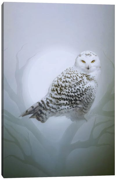 Snow Owl Canvas Art Print