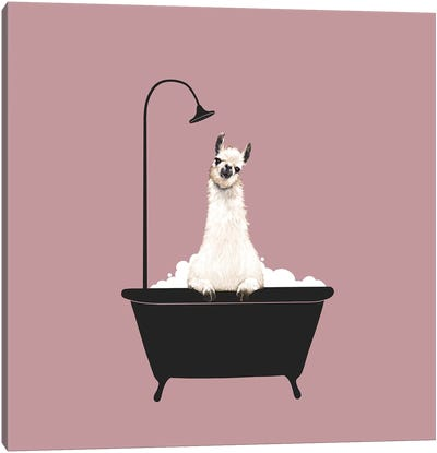 Llama In Bath Tub Canvas Art Print