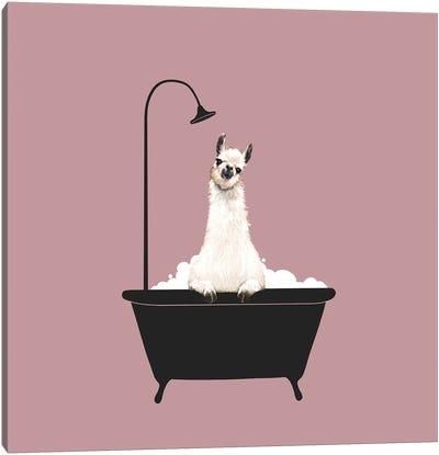 Llama In Bath Tub Canvas Art Print