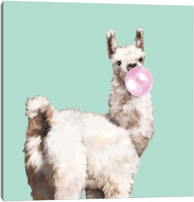 Baby Llama Blowing Bubble Gum Canvas Art Print