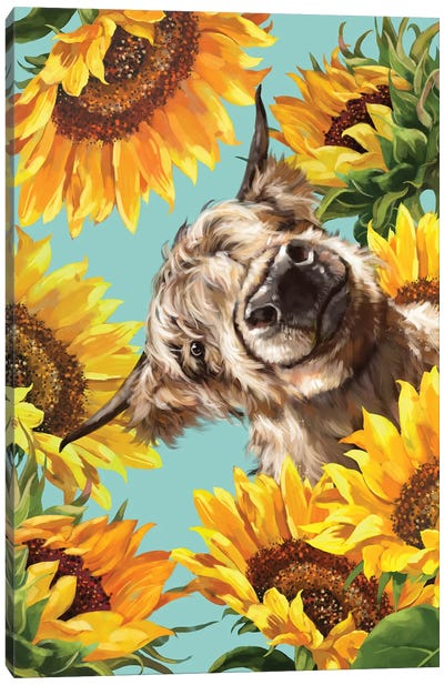 Highland Cow With Sunflower Canvas Art Print