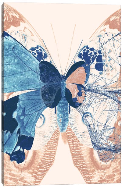 Butterfly Triptych II Canvas Art Print