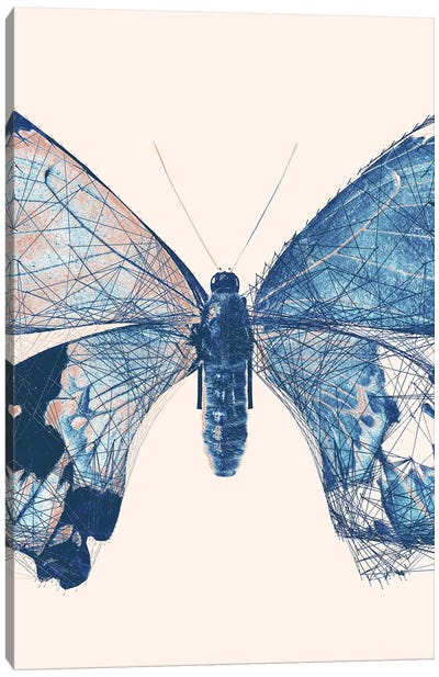 Butterfly V Canvas Art Print