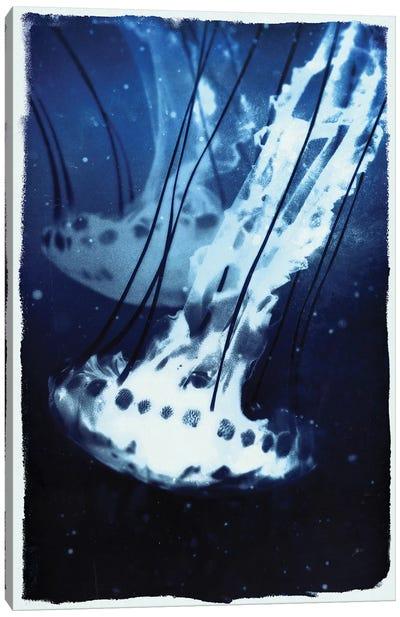 Indigo Jellyfish Canvas Art Print