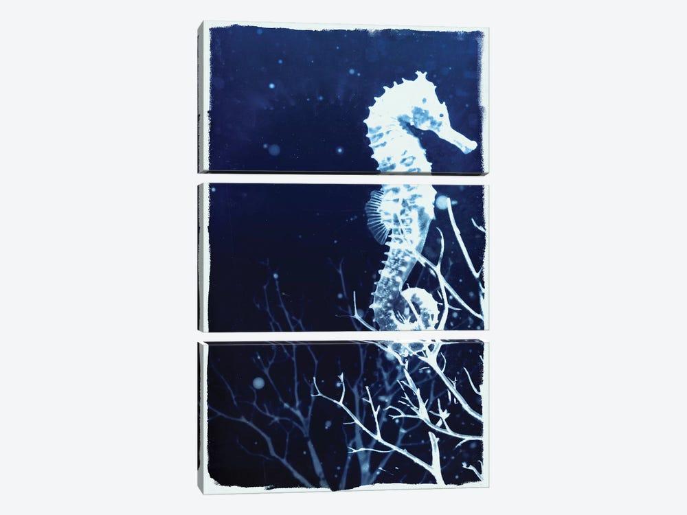 Indigo Seahorse by 33 Broken Bones 3-piece Canvas Art