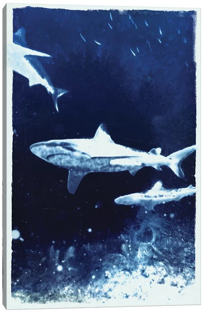 Indigo Sharks Canvas Art Print