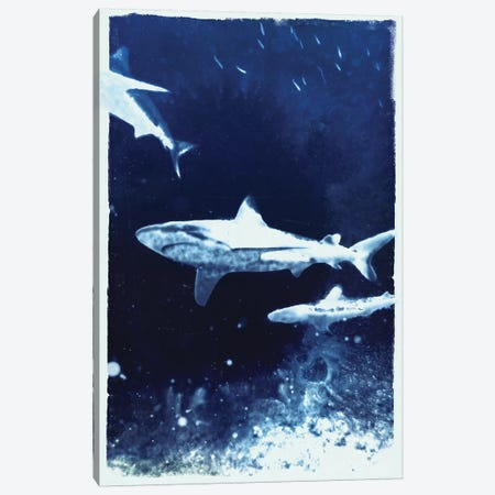 Indigo Sharks Canvas Print #BNZ29} by 33 Broken Bones Canvas Artwork
