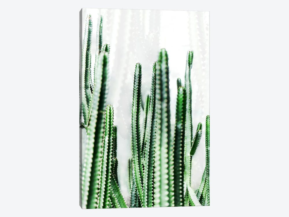 Cactus IV by Mareike Böhmer 1-piece Canvas Artwork
