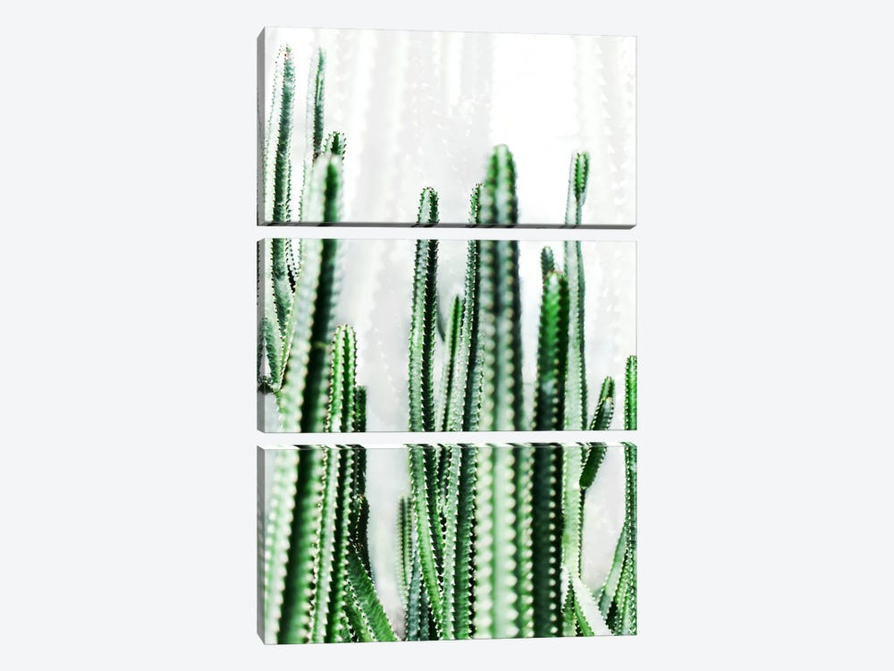 Cactus IV by Mareike Böhmer 3-piece Canvas Artwork