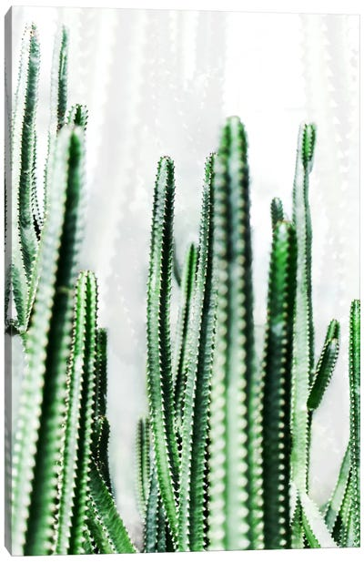 Cactus IV Canvas Art Print