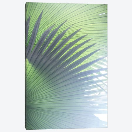 Palm Leaves V Canvas Print #BOH110} by Mareike Böhmer Canvas Artwork