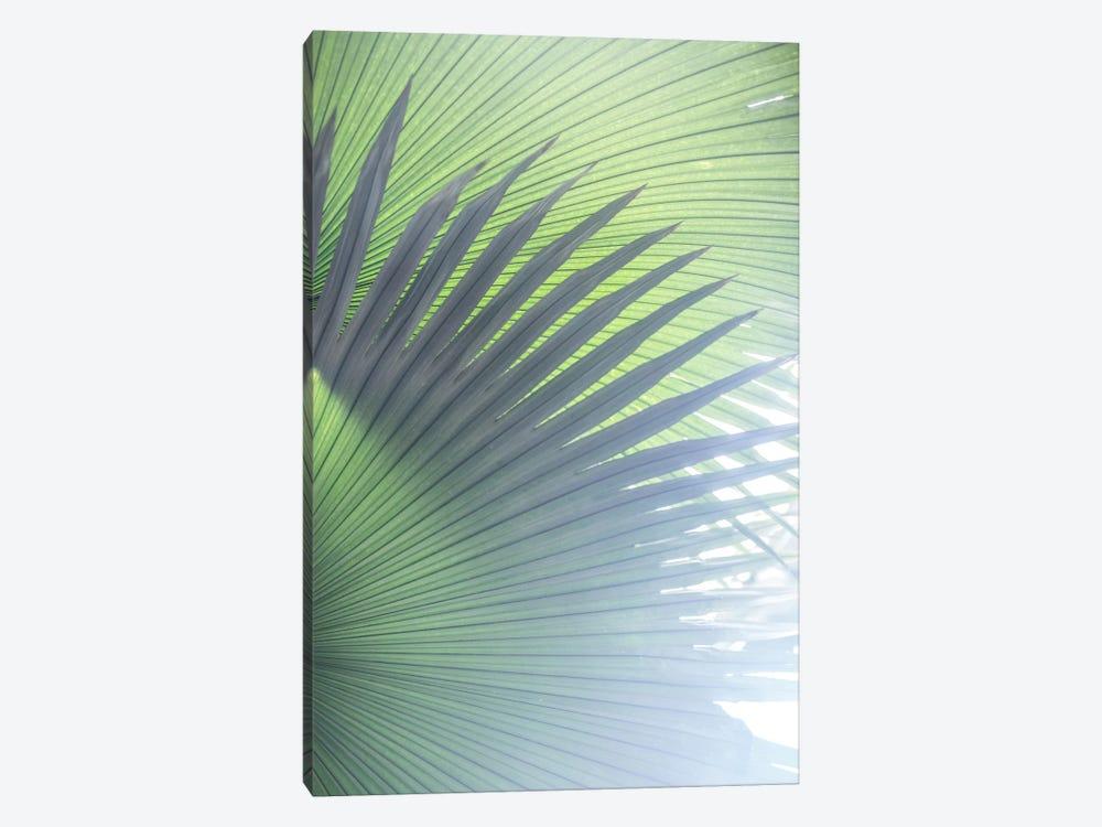 Palm Leaves V by Mareike Böhmer 1-piece Canvas Artwork