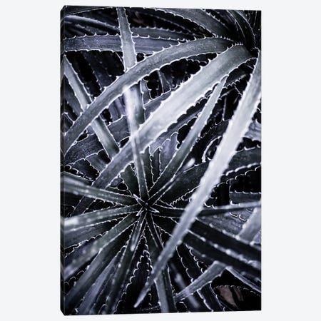 Cactus III Canvas Print #BOH117} by Mareike Böhmer Canvas Art Print