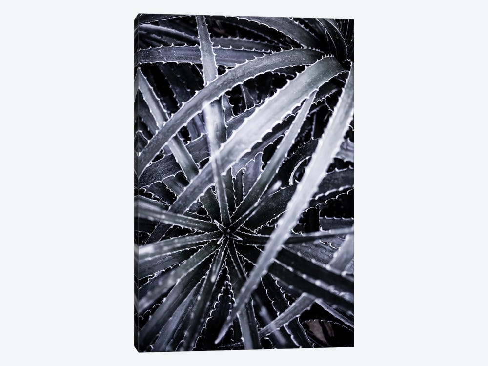 Cactus III 1-piece Canvas Art Print