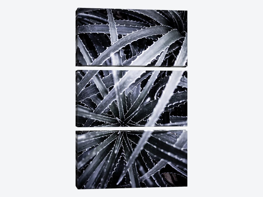 Cactus III by Mareike Böhmer 3-piece Canvas Print