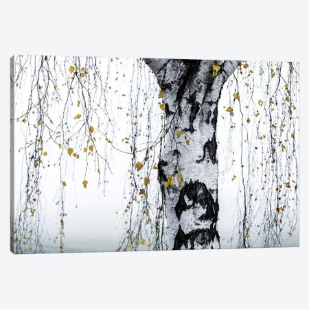 Birch Tree I Canvas Print #BOH165} by Mareike Böhmer Canvas Artwork