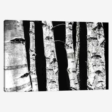 Birch Trees II Canvas Print #BOH166} by Mareike Böhmer Canvas Artwork