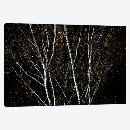 Birch Trees IV Canvas Print #BOH167} by Mareike Böhmer Canvas Wall Art