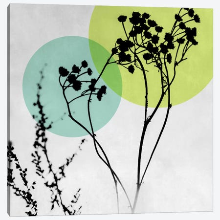 Abstract Flowers II Canvas Print #BOH2} by Mareike Böhmer Art Print