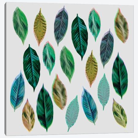 Green Leaves II Canvas Print #BOH55} by Mareike Böhmer Canvas Print