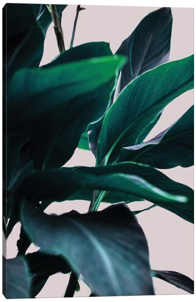 Leaves IV Canvas Art Print