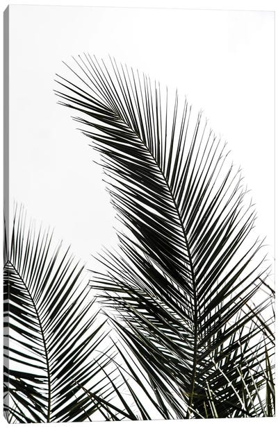 Palm Leaves I Canvas Art Print