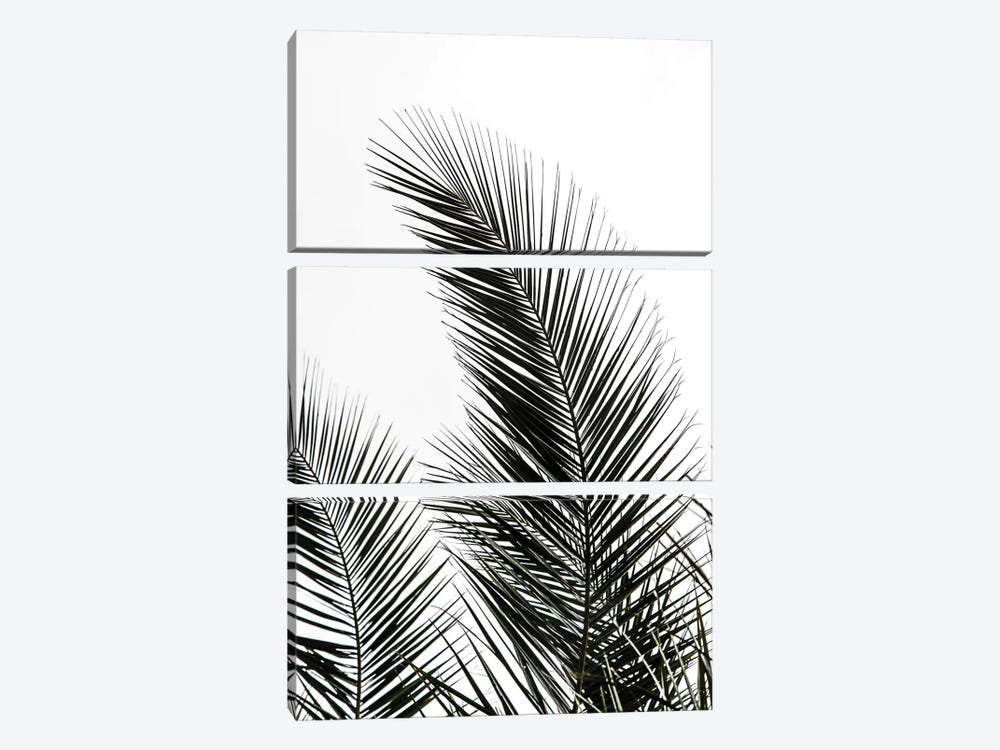 Palm Leaves I 3-piece Canvas Artwork