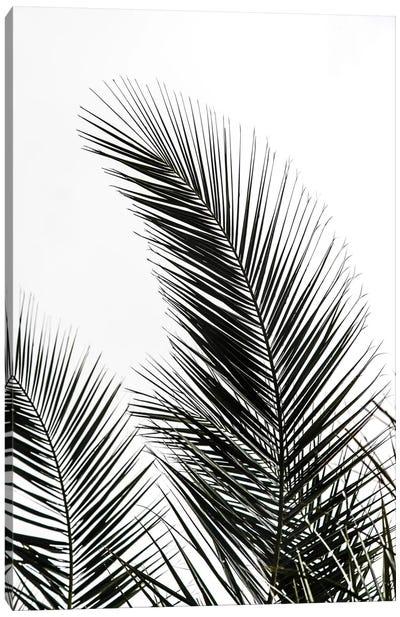 Palm Leaves I Canvas Art Print