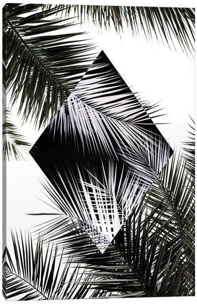 Palm Leaves II Canvas Art Print