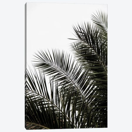 Palm Leaves III Canvas Print #BOH84} by Mareike Böhmer Canvas Wall Art