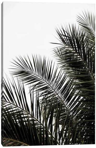 Palm Leaves III Canvas Art Print