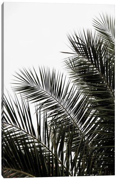Palm Leaves III Canvas Art Print