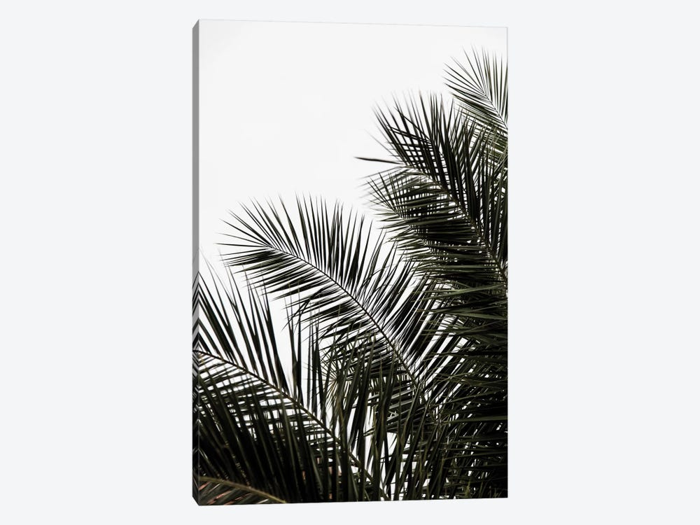 Palm Leaves III by Mareike Böhmer 1-piece Canvas Wall Art