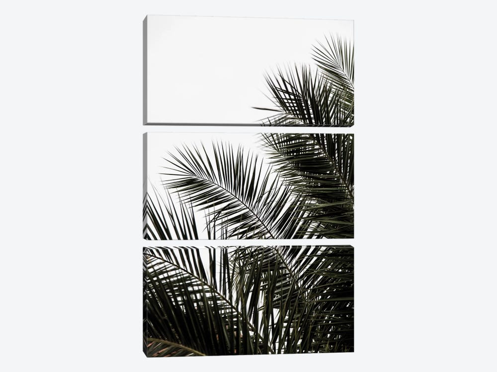 Palm Leaves III by Mareike Böhmer 3-piece Canvas Art