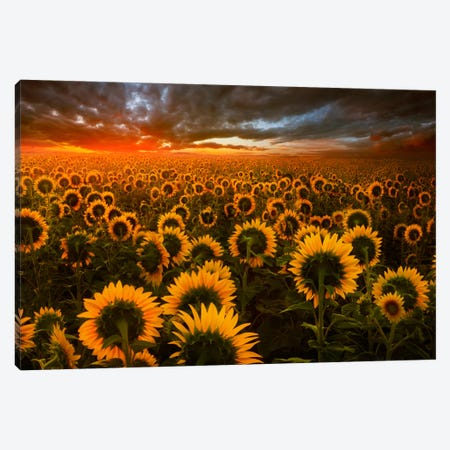 Echoes Of Light Canvas Print #BOR12} by Adrian Borda Canvas Art