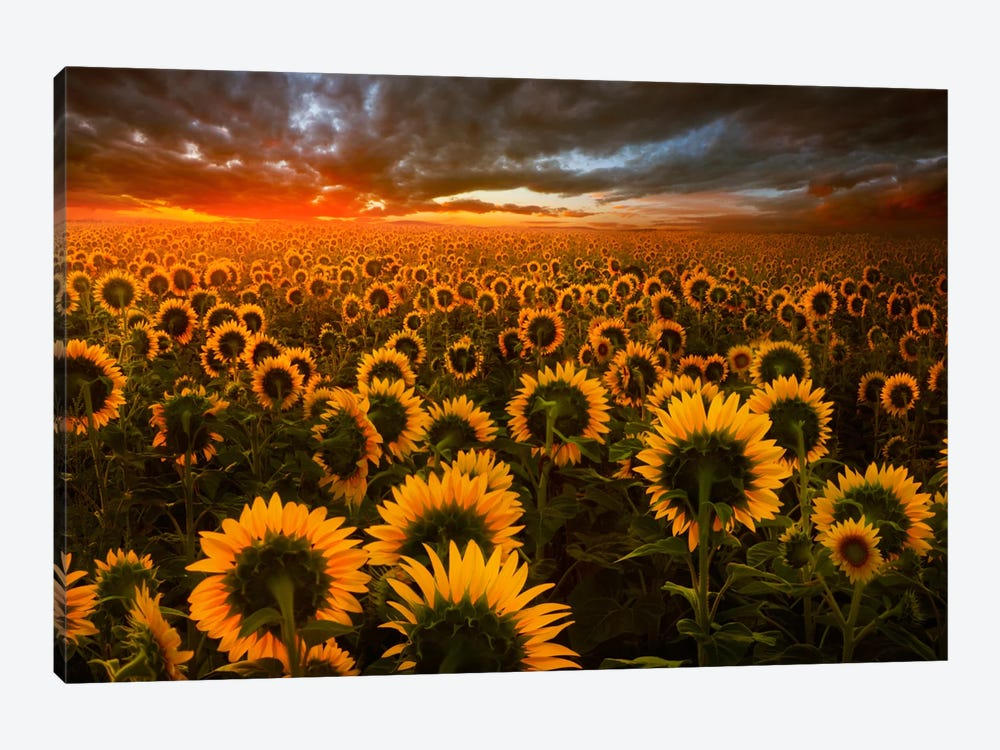 Echoes Of Light by Adrian Borda 1-piece Canvas Art
