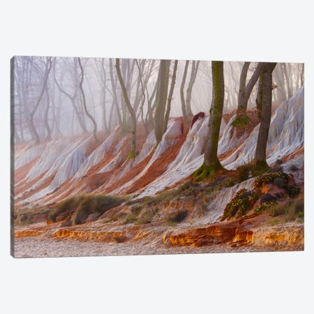 Enchanted Forest Canvas Print #BOR13} by Adrian Borda Canvas Artwork