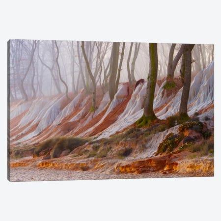 Enchanted Forest Canvas Print #BOR13} by Adrian Borda Canvas Artwork