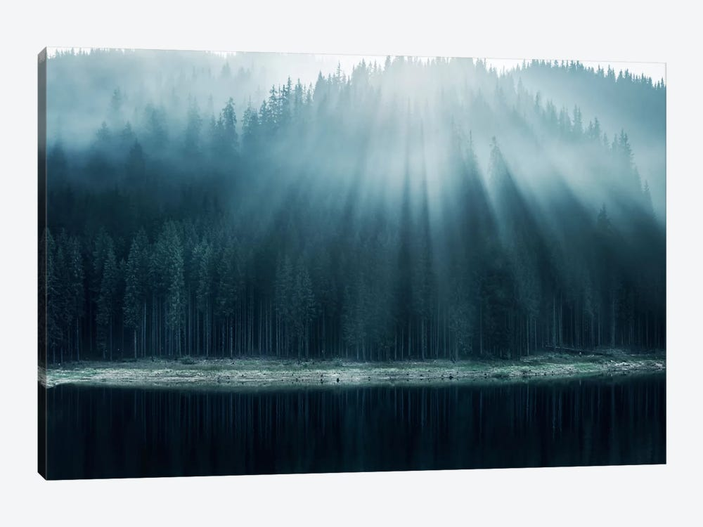 Morning Glory I by Adrian Borda 1-piece Canvas Art Print