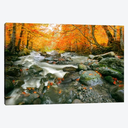 Rushing To The Ocean Canvas Print #BOR48} by Adrian Borda Art Print