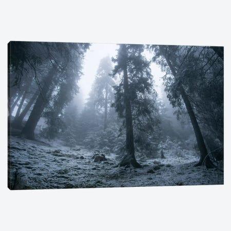 The First Snow Canvas Print #BOR58} by Adrian Borda Canvas Art